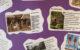 Inbreng Beleefboeken door de basisscholen